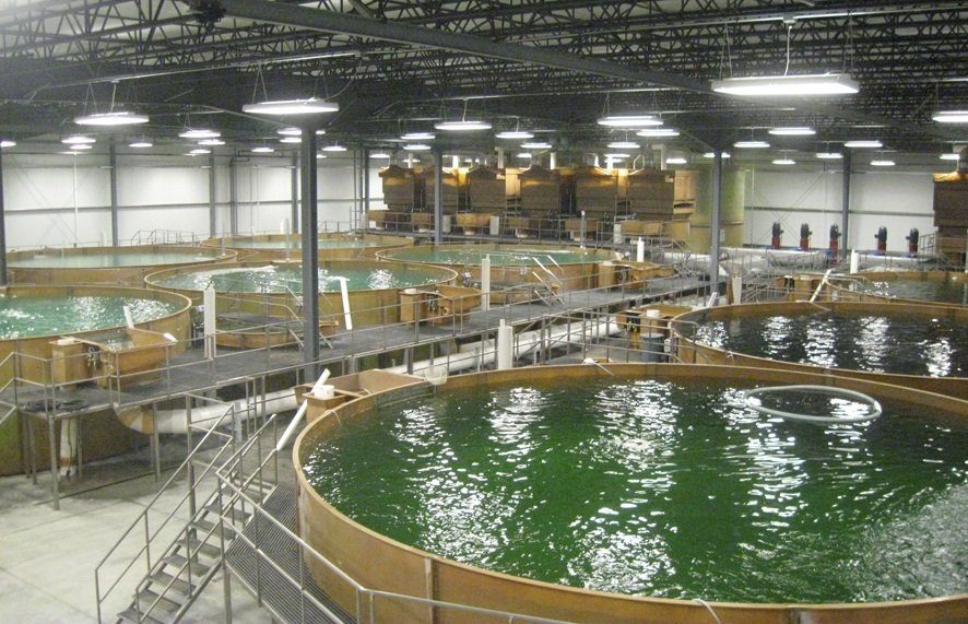 Bell Aquaculture production facility