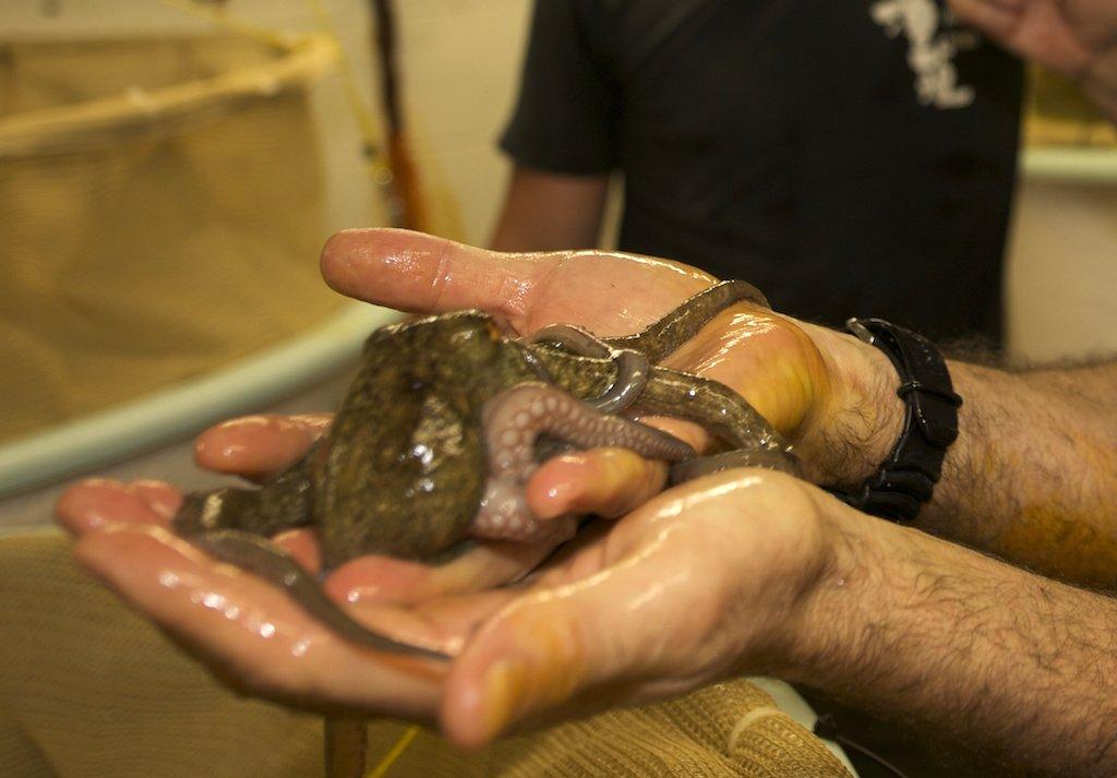 About shrimp culture_jobs in dubai?