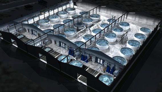 Concept of Sea Bass Farm