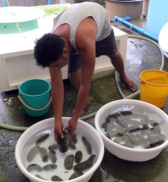 sanfish 2.jpg